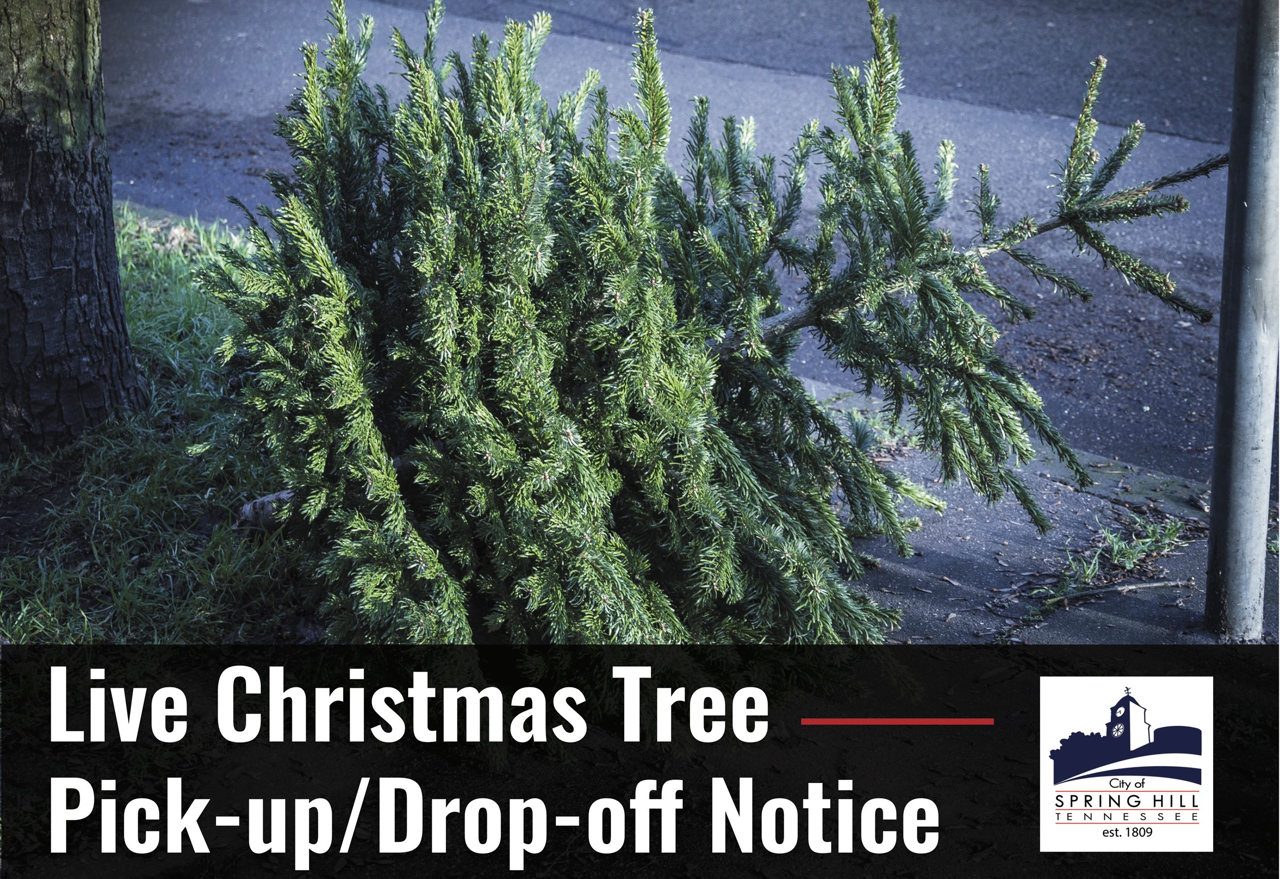 Live Christmas Tree Drop off notice